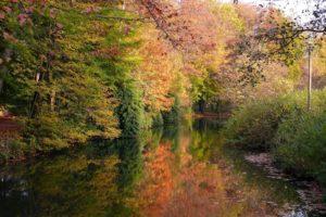 autum, Trees, Nature, Landscape, Leaf, Leaves