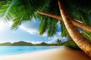 tropical, Palm, Trees, Beach, Ocean, Trees
