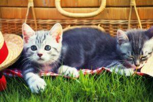 cats, Kitten, Grass, Hat, Picnic, Cat, Cat, Grass, Hat, Picnic