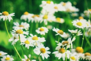 flower, Nature, Plant, Beautiful, Flowers, Colorful