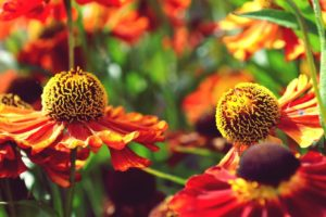 flower, Plant, Nature, Beautiful, Colorful, Flowers