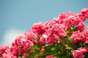 flower, Nature, Plant, Beautiful, Colorful, Flowers