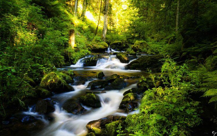 forest, Waterfall, Rocks, Trees, Rivers, Stream, Landscape, Plants HD Wallpaper Desktop Background