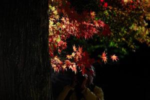 light, Autumn, Fall, Trees