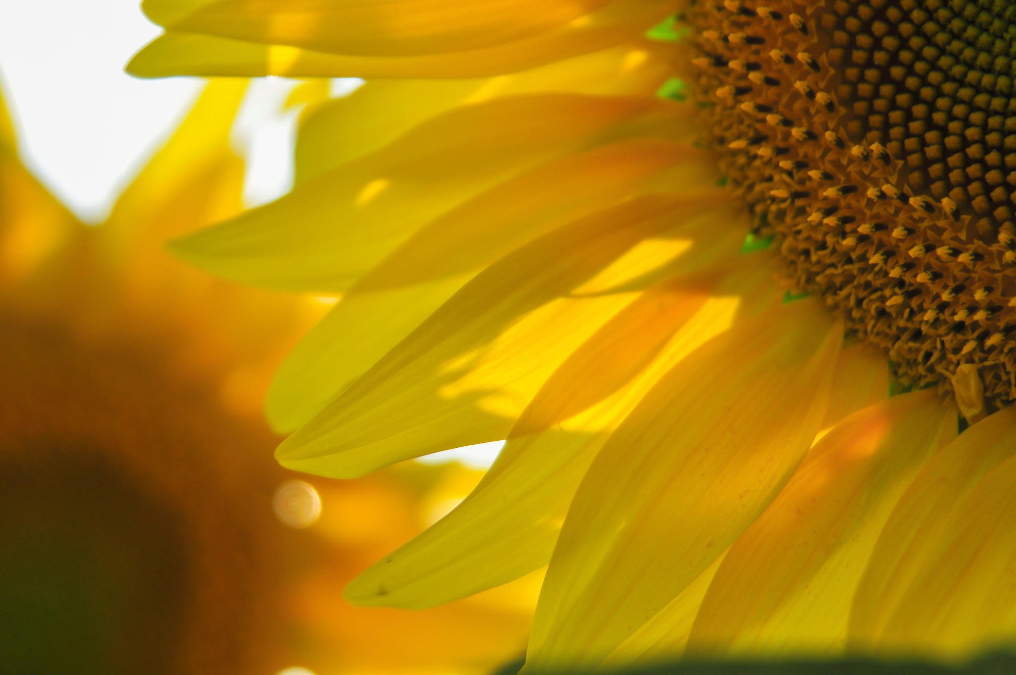 nature, Flower, Beautiful, Flowers, Plant, Colorful, Petals Wallpaper