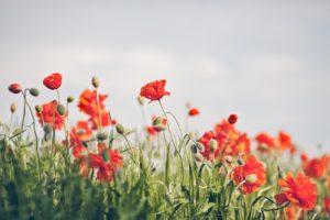 nature, Flower, Beautiful, Flowers, Plant, Colorful, Petals