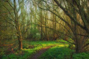 landscape, Nature, Beautiful, Forest, Area, Wild, Sky, Landscapes