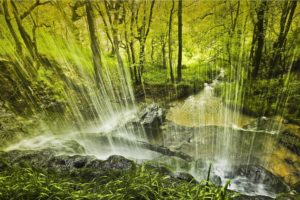 forest, Trees, Waterfall, Nature