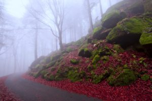 autumn, Nature, Landscape, Fog, Forest, Trees, Rocks, Beauty, Road, Leaves