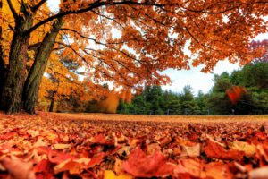 landscapes, Nature, Trees, Autumn,  season , Red, Forest, Orange, Canada, Parks, Fallen, Leaves, Autumn