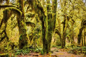 olympic, National, Park, Washington, Usa, Wood, Moss, Flora, Olympic, National, Park, Washington, Hoh, Rain, Forest