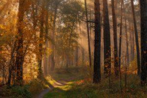 forest, Tree, Landscape, Nature, Autumn