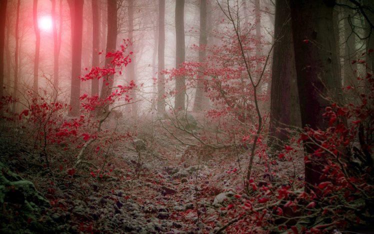 forest, Tree, Landscape, Nature, Autumn, Path HD Wallpaper Desktop Background
