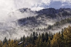 forest, Tree, Landscape, Nature