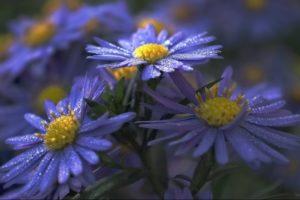 flower, Flowerrs, Nature, Landscape