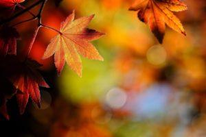 nature, Leafs, Autumn, Beauty, Landscape
