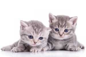 kittens, Kitten, Cat, Cats, Baby, Cute