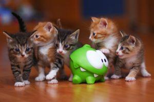 kittens, Kitten, Cat, Cats, Baby, Cute