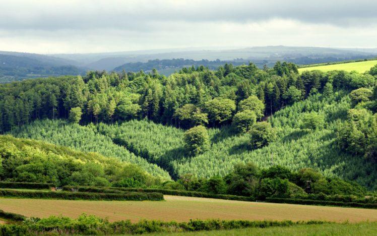 hill, Landscape, Nature, Green, Forest, Field, Countryside HD Wallpaper Desktop Background