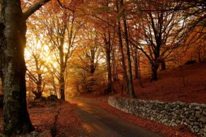 autumn, Fall, Tree, Forest, Landscape, Nature, Leaves
