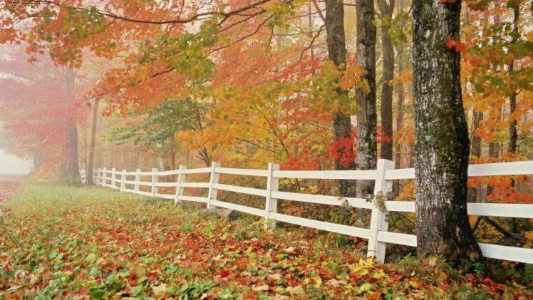 autumn, Fall, Tree, Forest, Landscape, Nature, Leaves HD Wallpaper Desktop Background