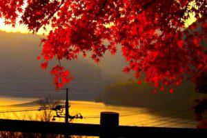 autumn, Fall, Landscape, Nature, Tree, Forest, Leaf, Leaves