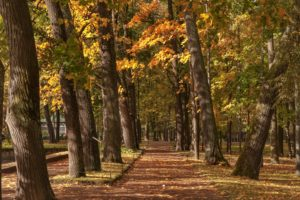 autumn, Fall, Landscape, Nature, Tree, Forest, Leaf, Leaves, Path, Trail