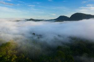 mist, Fog, Landscapes, Trees, Forest, Hills