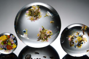 transparent, Balloons, Flowers, Bees, Flower, Glass, Sphere, Mood