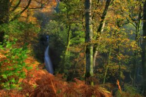 england, Parks, Forests, Waterfalls, Autumn, Trunk, Tree, Dockray, Nature