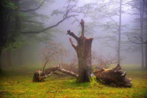 forest, Fog, Haze, Summer, August