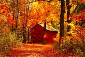 autumn, Fall, Season, Nature, Landscape, Leaf, Leaves, Color, Seasons, Tree, Forest