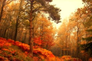 forest, Trees, Nature, Landscape, Tree