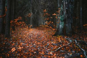 forest, Trees, Nature, Landscape, Tree, Autumn, Fall