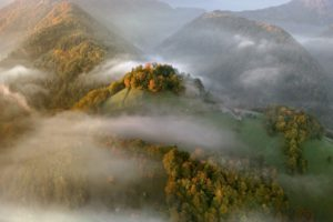 fog, Tree, Forest, Autumn, Nature, Beauty, Mist, Landscape