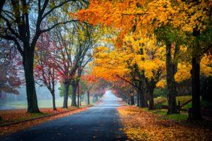 trees, Path, Road, Nature, Fall, Leaves, Autumn, Splendor, Autumn