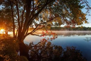 tree, Lake, Grass, Reflection, Nature, Beauty, Landscape
