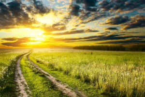 scenery, Sunrises, And, Sunsets, Fields, Sky, Roads, Ear, Botany, Clouds, Nature