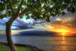 usa, Sunrises, And, Sunsets, Coast, Ocean, Trees, Hawaii, Hdr, Nature