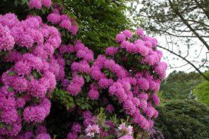 eranium, Closeup, Flowers
