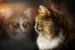cats, Glass, Window, Animals, Fantasy, Wallpapers