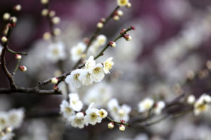 spring, Blossom, Tree, Branches, Flowers, Fruit