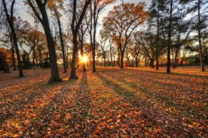 autumn, Trees, Leaves, Park, Sun