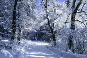 trees, Frost, Forest, Road, Snow, Winter