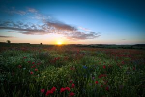 clouds, Landscapes, Nature, Sun, Dawn, Flowers, Fields, United, Kingdom, Poppies
