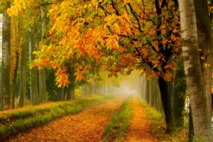fall, Colors, Walk, Leaves, Autumn, Nature, Trees, Road, Forest, Park