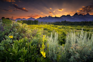 grand, Teton, National, Park, Sunset, Clouds, Evening, Mountains, Field, Flowers, Herbs, Woods, Trees, Pine, Trees