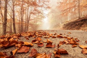 misty, Foggy, Road, Autumn, Beech, Landscape, Macro, Deciduous, Leaves, Nature, Trees, Forest
