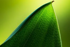green, Leaf, Macro