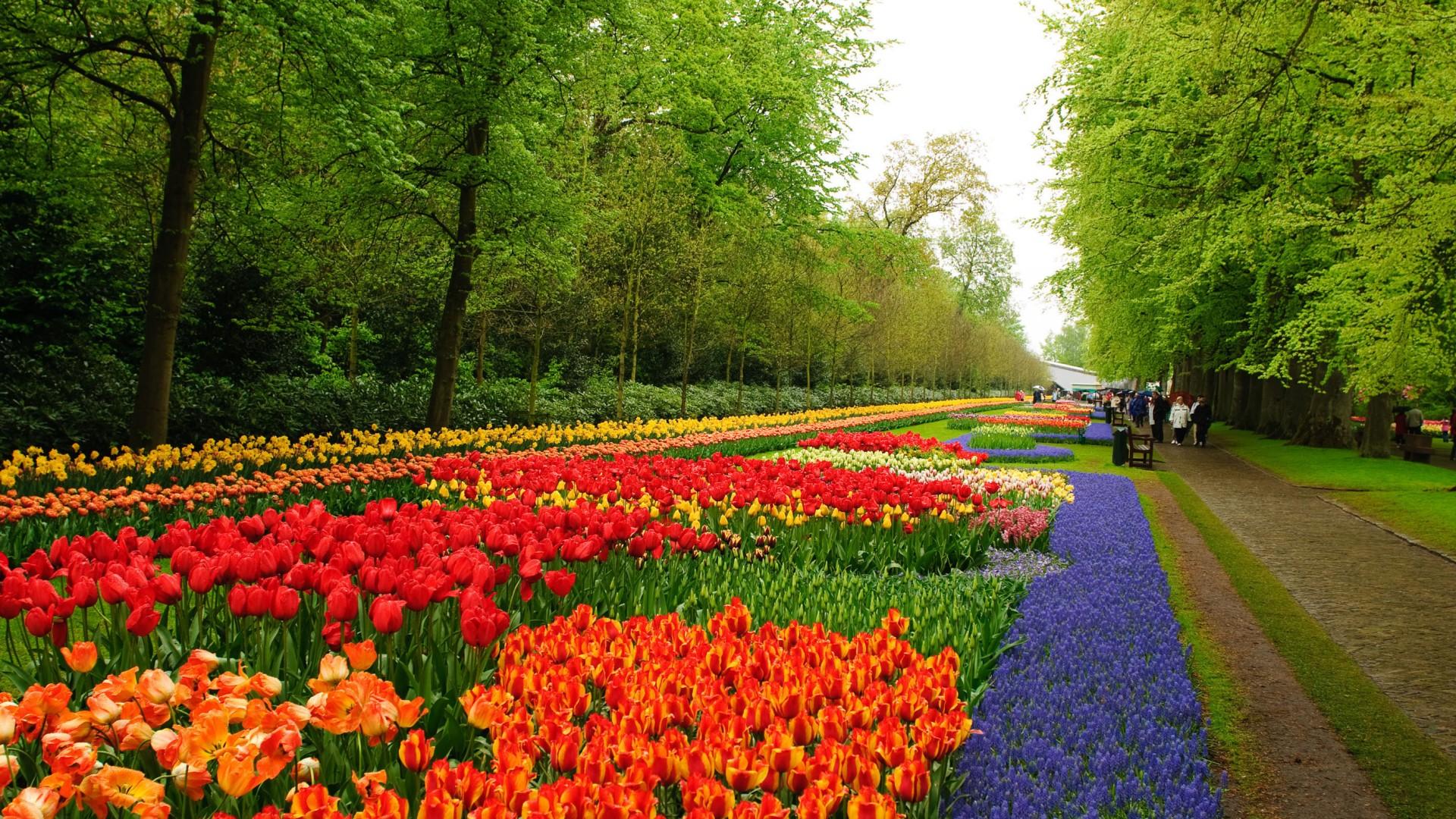 Flower Garden Wallpapers Hd Desktop And Mobile Backgrounds